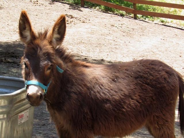 donkey-6
