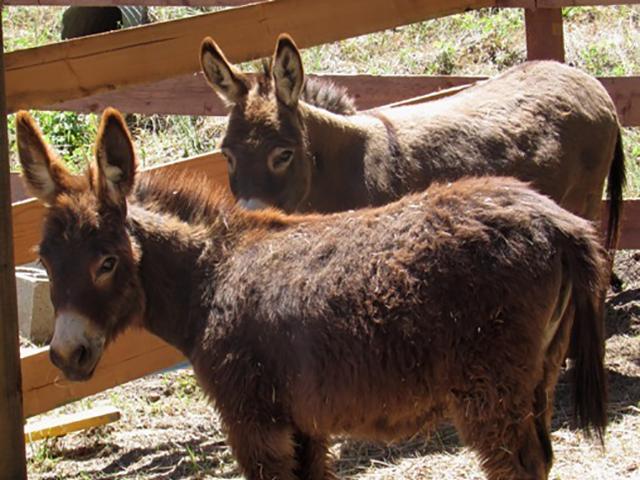 donkeys-5